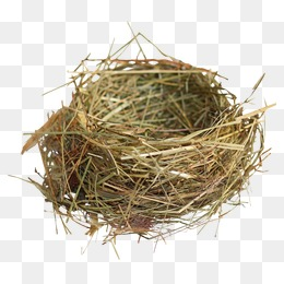 Nest PNG - 15879