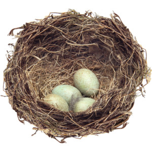 Nest PNG - 23504