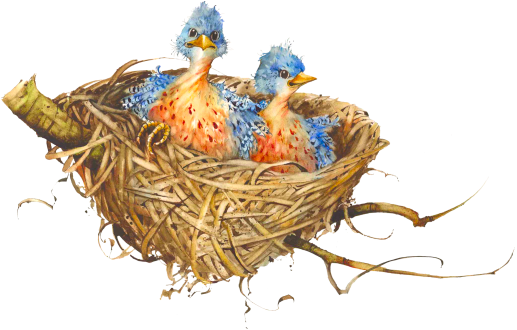 Nest PNG - 23498