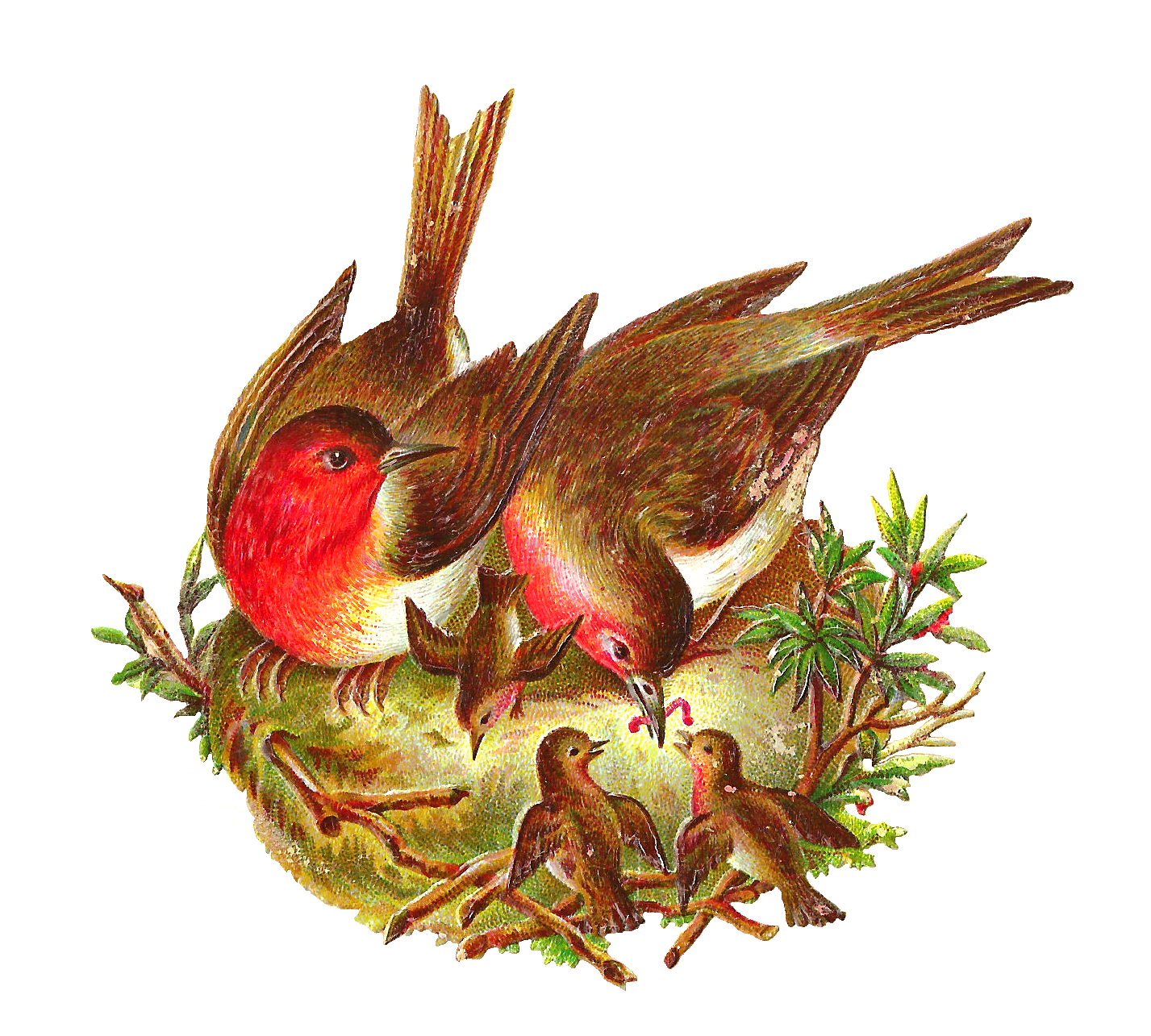 Nest PNG - 23501