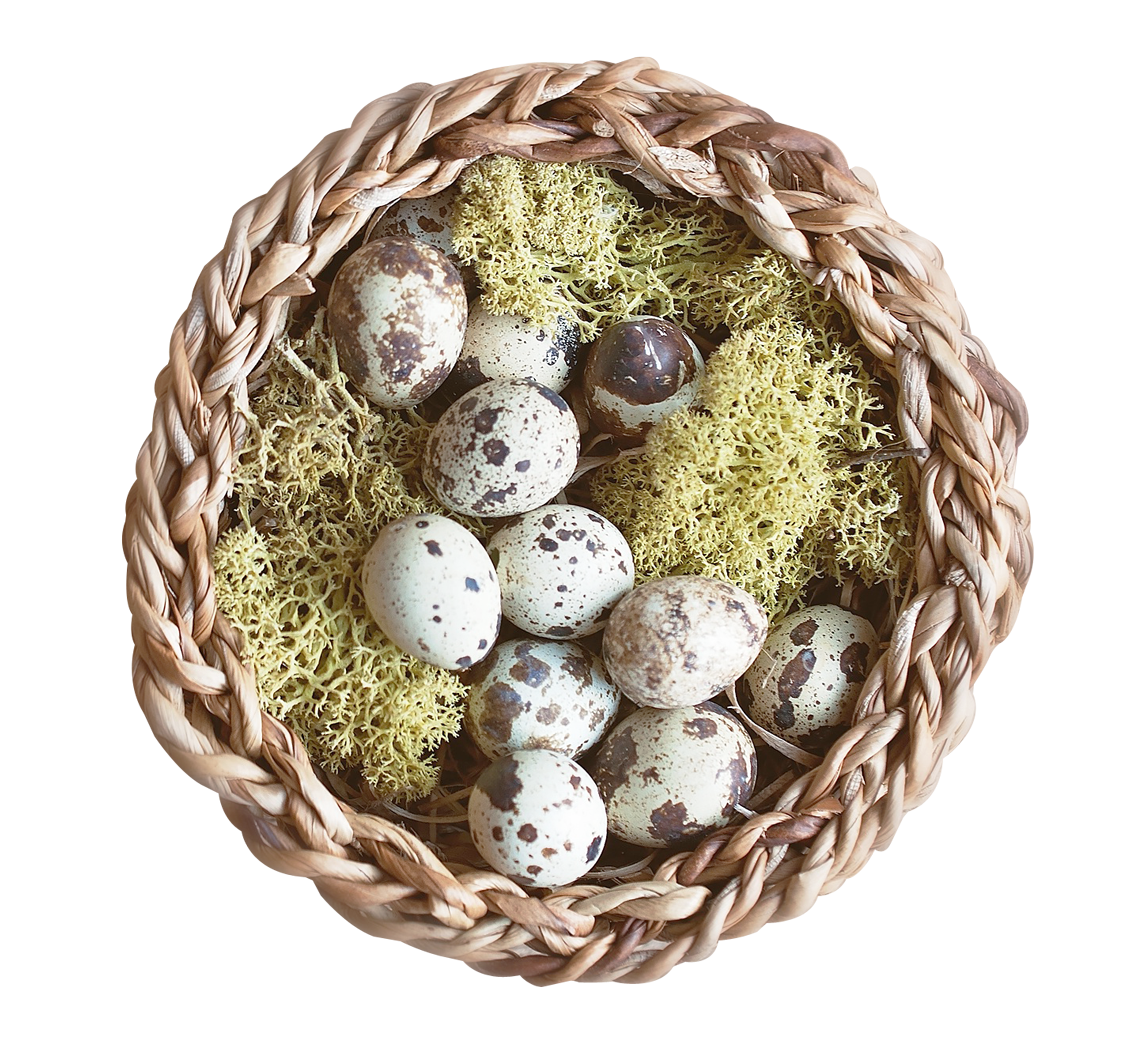 Nest PNG - 23508