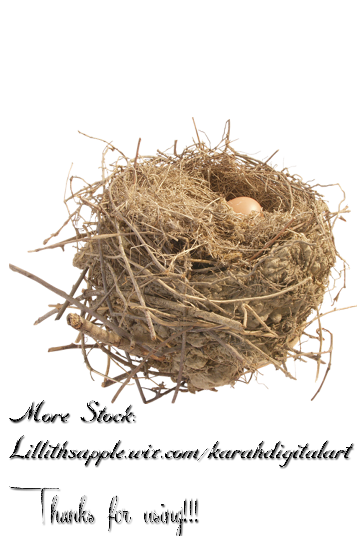 . PlusPng.com Nest Stock Png by KarahRobinson-Art - Nest PNG