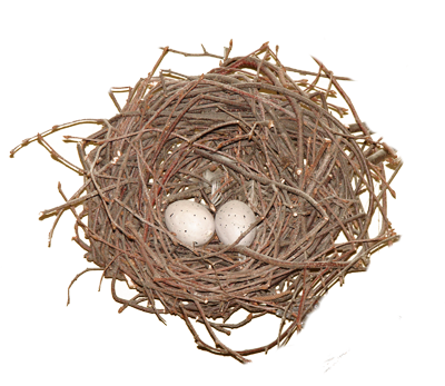 Nest PNG - 15876