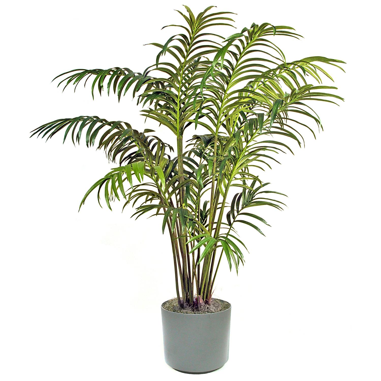 Nipa Tree PNG-PlusPNG.com-1500 - Nipa Tree PNG