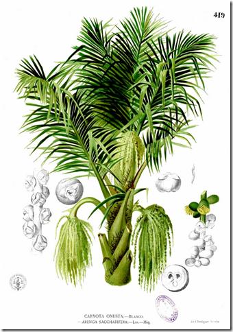 Nipa Tree PNG-PlusPNG.com-340 - Nipa Tree PNG