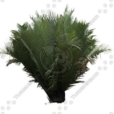 nipah - Nipa Tree PNG