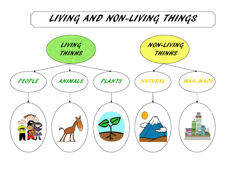 Mrs. Bacchusu0026#39; Class: Learning Games: Living Things - Non Living Things Pictures For Kids PNG