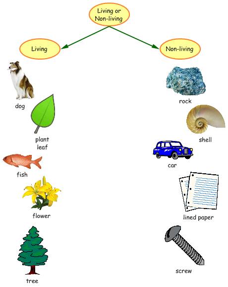 Today in class we created small group mind maps using Kidspiration. We used  Kidspiration to separate living and non-living things. - Non Living Things Pictures For Kids PNG
