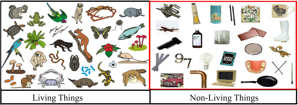 Unit 1 :Living Things and Non-Living Things - Non Living Things Pictures For Kids PNG