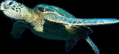 Fish PNG - 5050