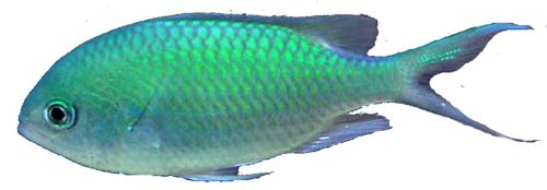 Fish PNG - 5048