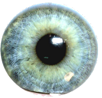 3 Ojo PNG by SofiaChicle PlusPng.com  - Ojo PNG