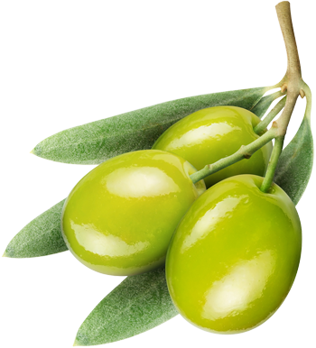 Olive PNG - 26789