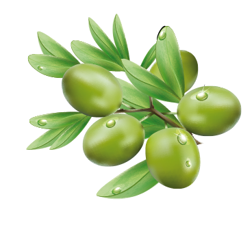 Olive PNG - 26794