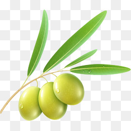 An olive - Olive PNG