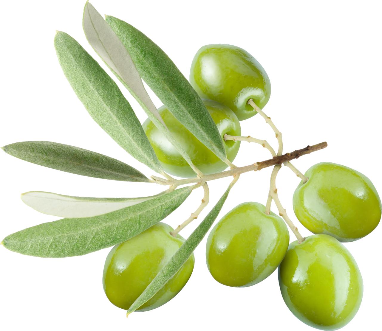 Olive PNG - 26785