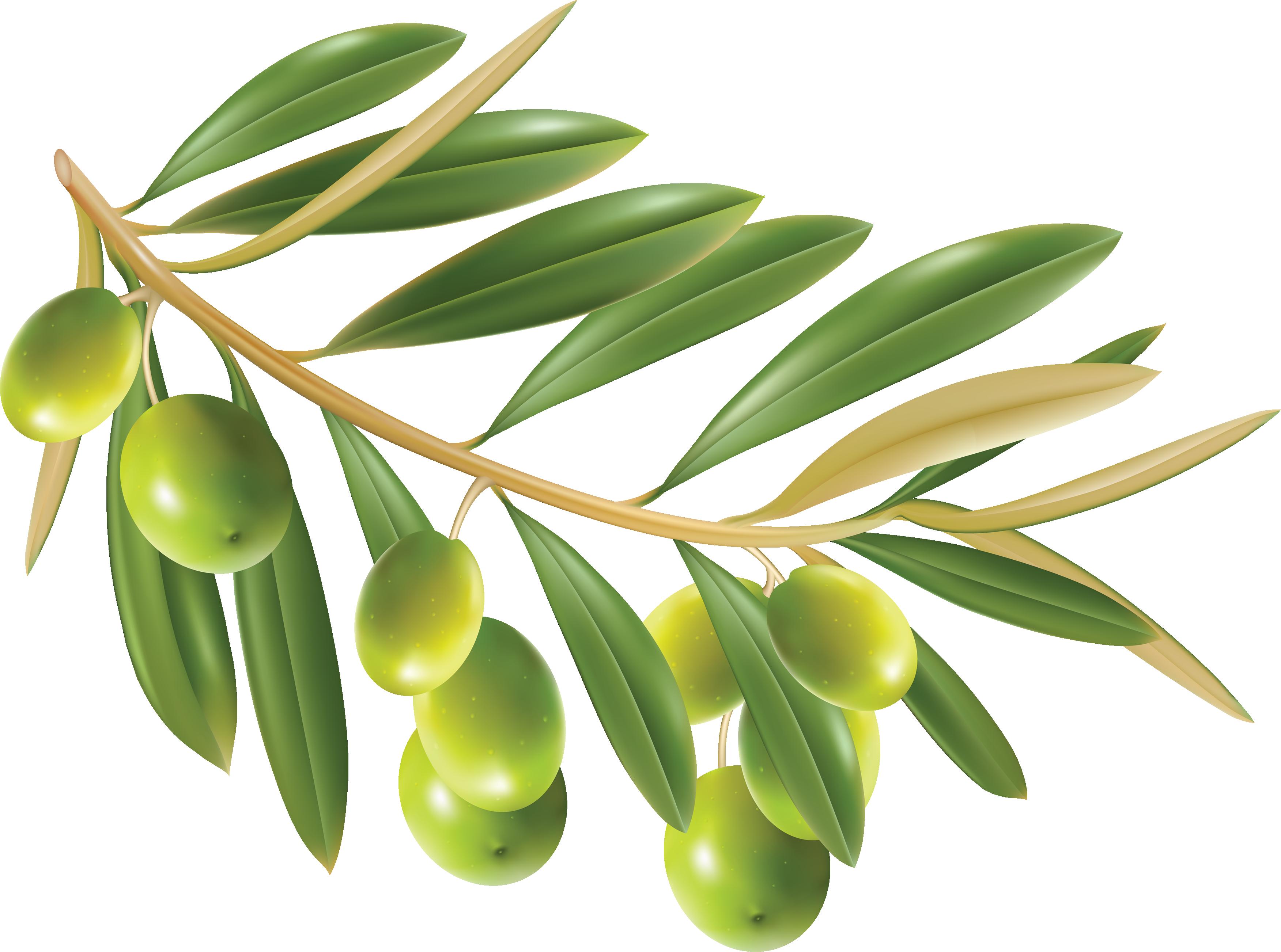 Olive PNG - 26786