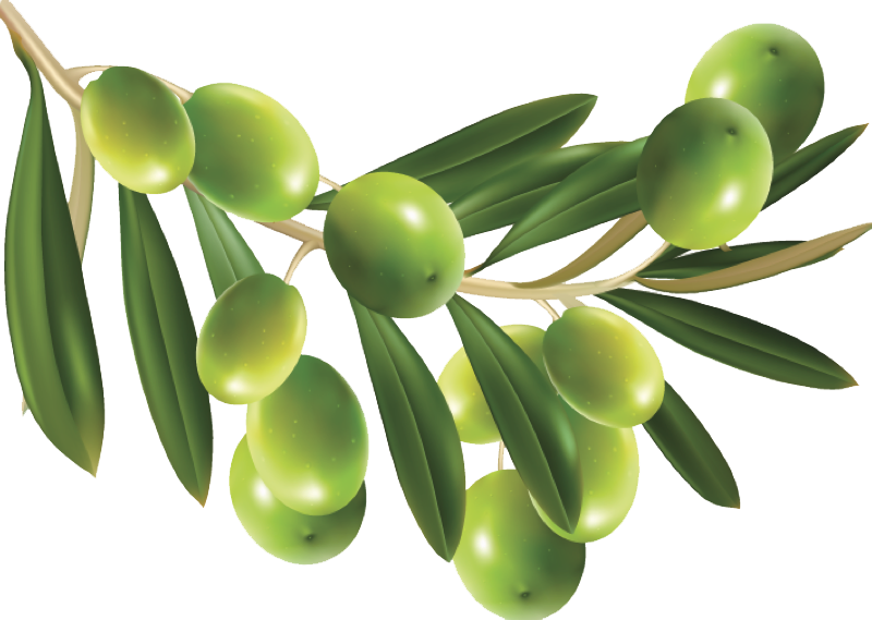 Olive PNG HD - Olive PNG