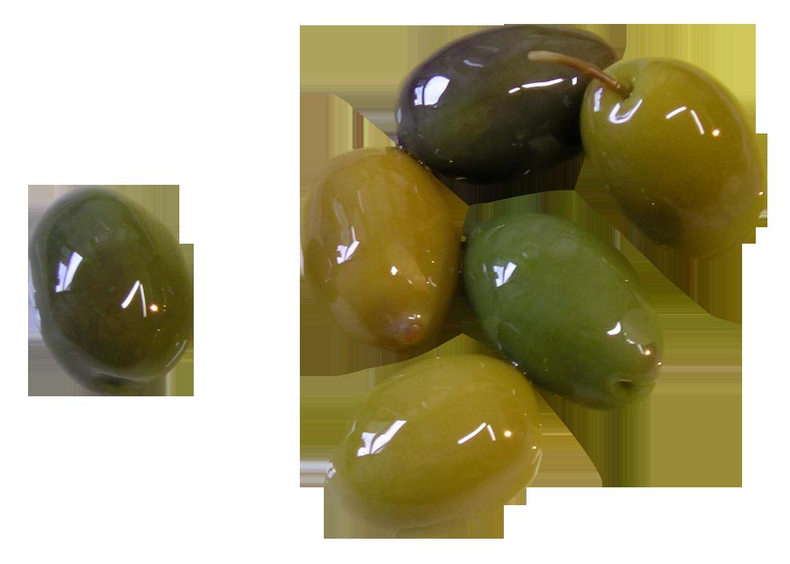 Olive PNG Image - Olive PNG