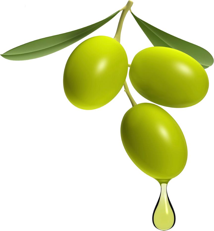 Olive PNG - 26781
