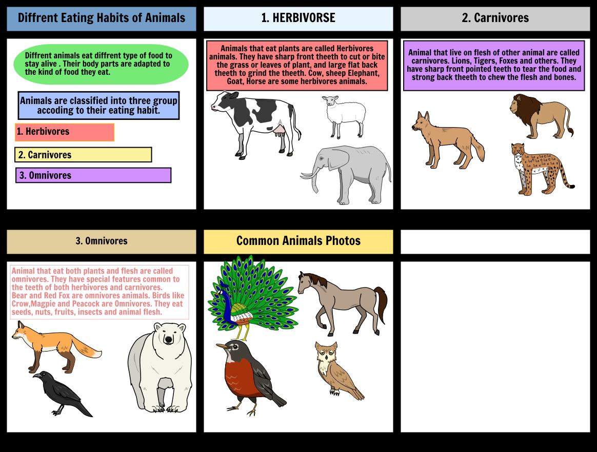 Omnivore Animals PNG-PlusPNG.com-1164 - Omnivore Animals PNG