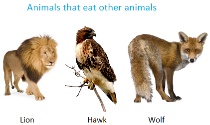 Animals that Eat other Animals - Omnivore Animals PNG