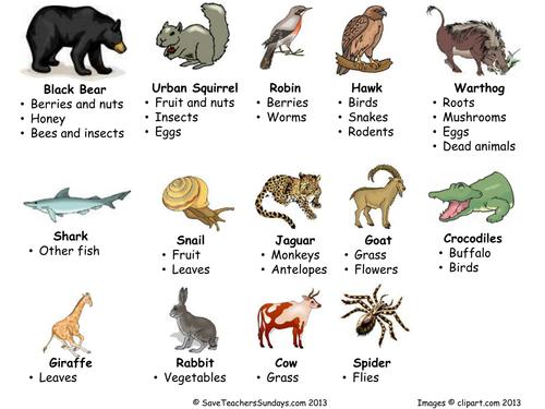 Carnivores, omnivores and herbivores Venn diagram by SaveTeachersSundays -  Teaching Resources - Tes - Omnivore Animals PNG