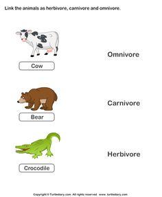 herbivores-carnivores-and-omnivores-animals.png (595×725) - Omnivore Animals PNG