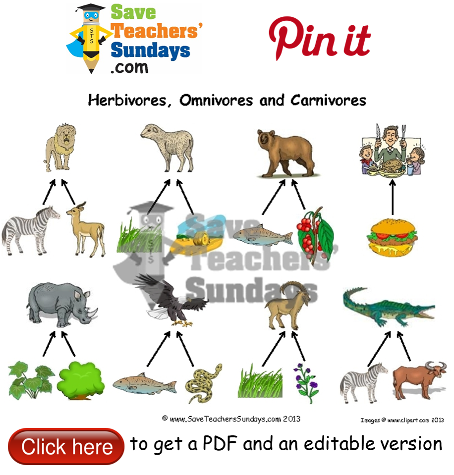 pin Herbivorous clipart carnivorous animal #14 - Omnivore Animals PNG
