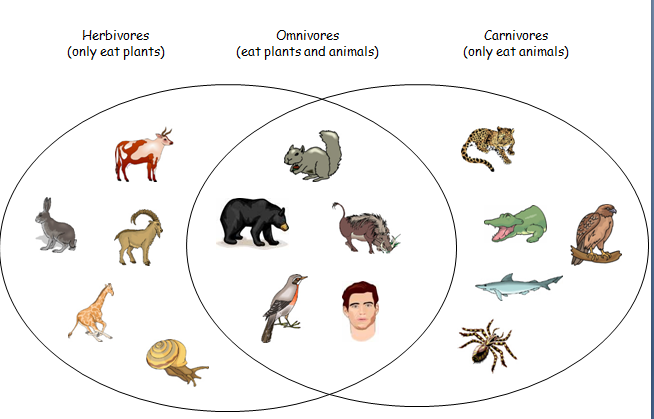 venn - Omnivore Animals PNG