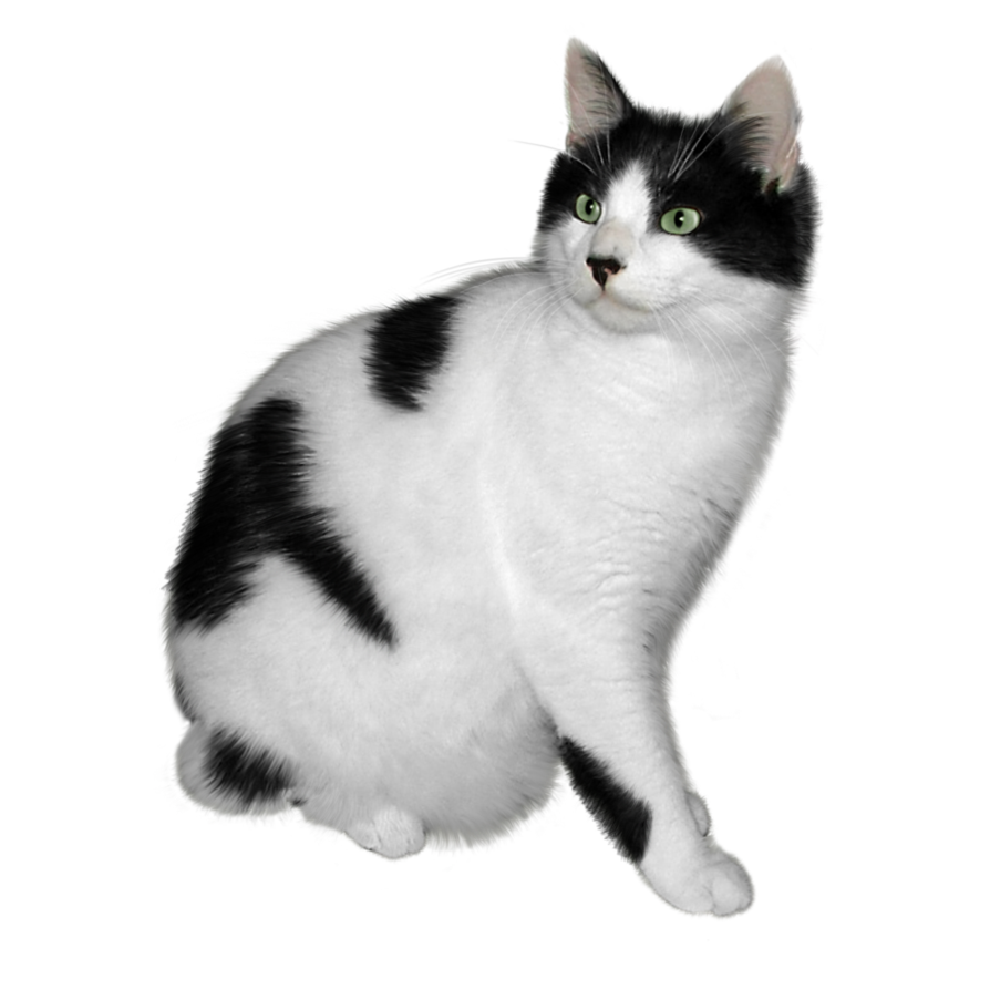 Black and white cat FREE png stock by JaneEden PlusPng.com  - One Cat PNG