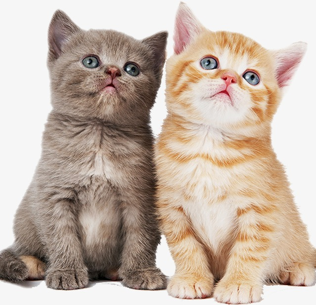 One pair of cats, Lovers, Animal PNG Image and Clipart - One Cat PNG