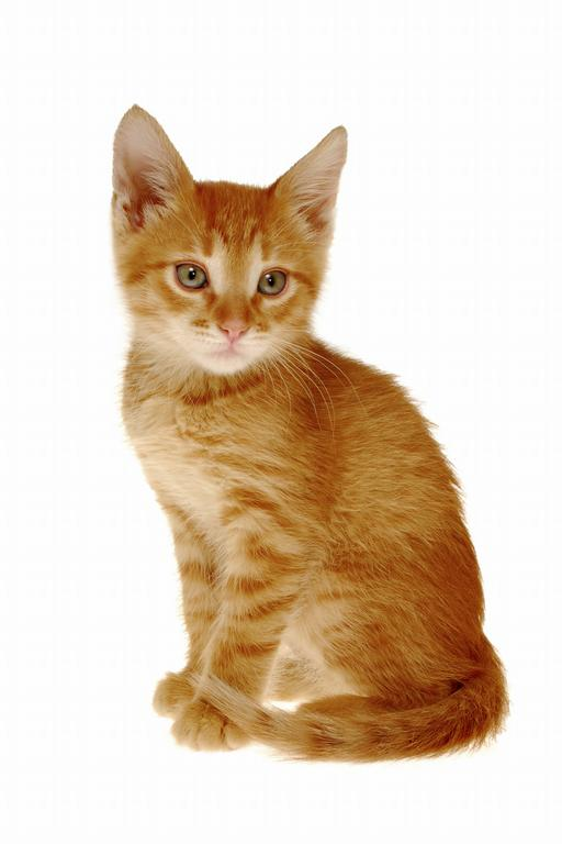 The Strange Orange Cat. One day a strange Orange cat came to the Catville.  The other cats walked over to him and said, u201cboy, thatu0027s s. - One Cat PNG