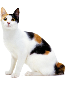 The two thyroid glands are oval shaped and lie one on each side of the  trachea (windpipe) on the underside of the neck. They produce thyroxin  (thyroid PlusPng.com  - One Cat PNG