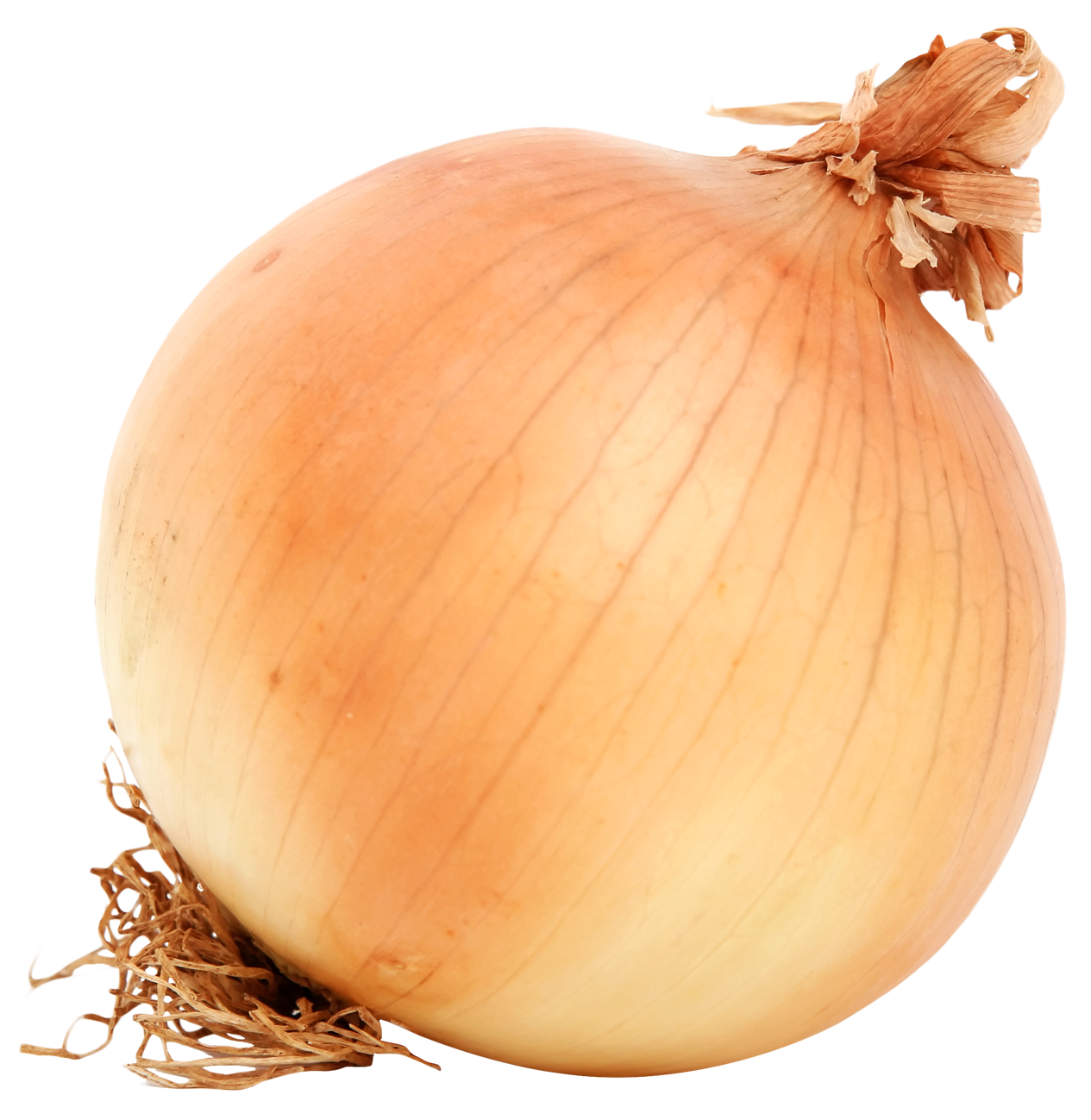 Onion PNG - 18480