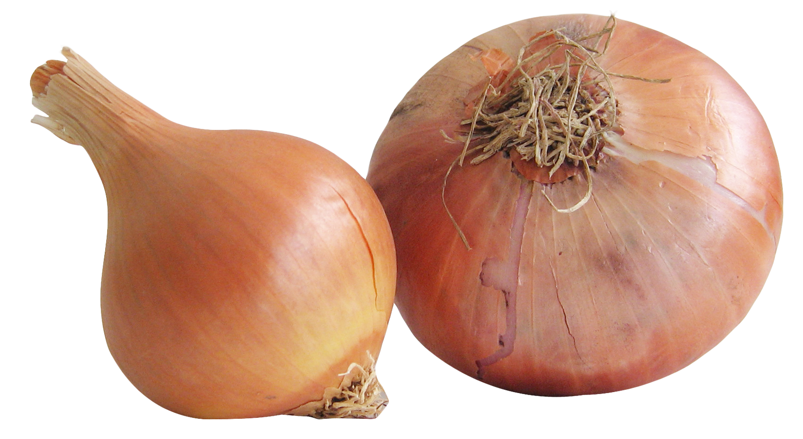 Onion PNG - 18486