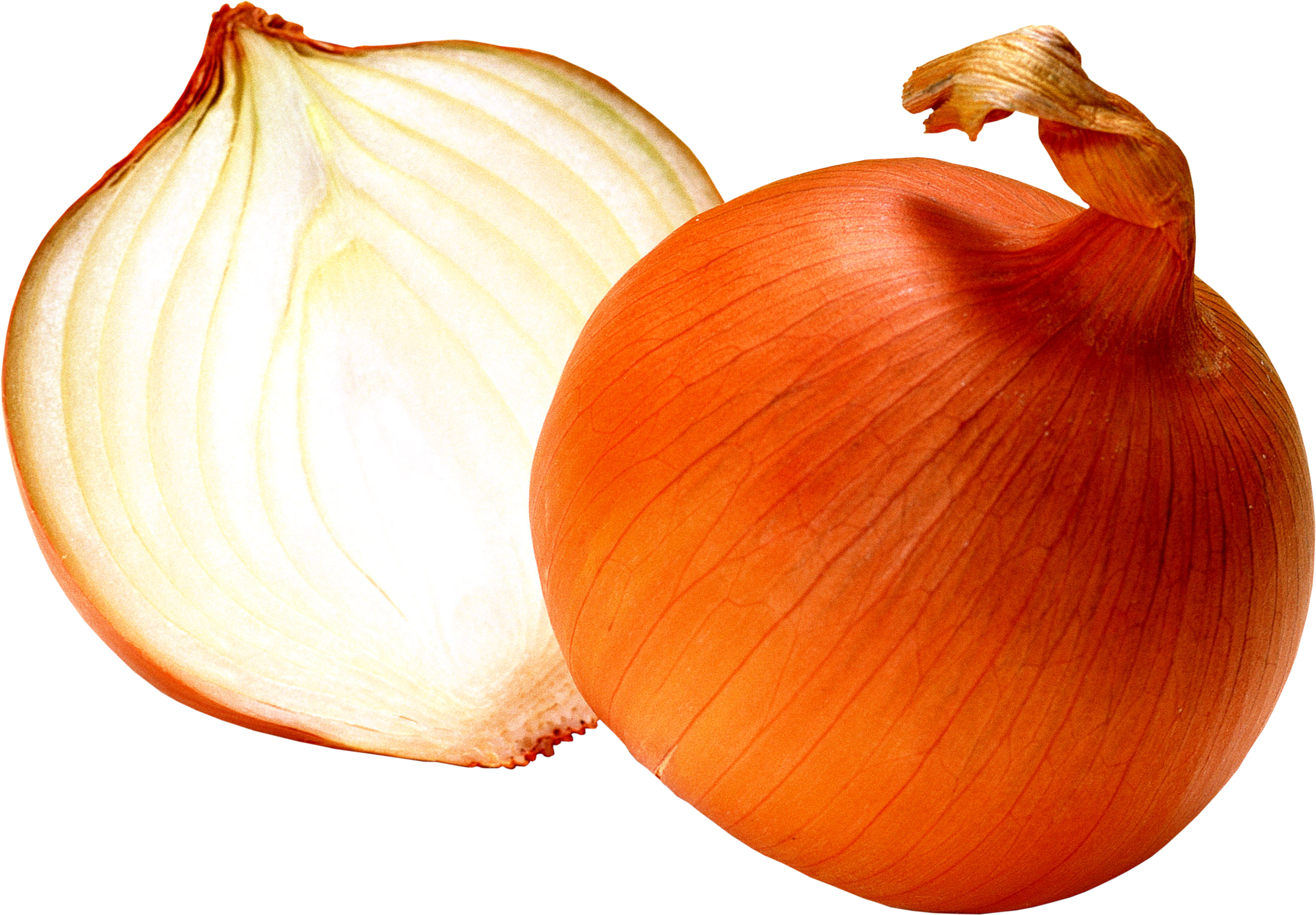 Onion PNG - 18483