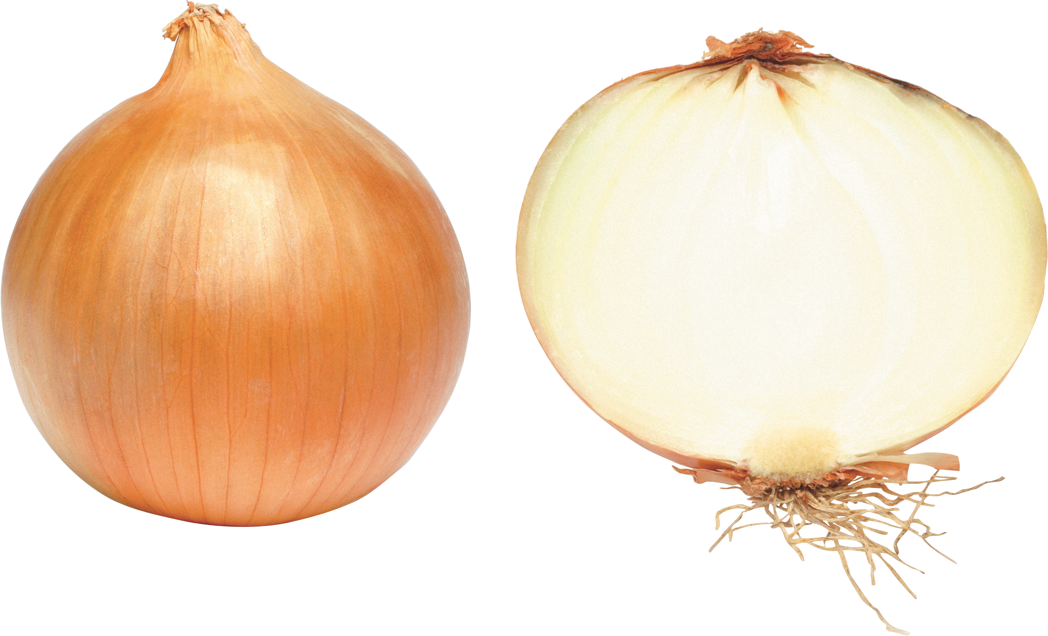 Onion PNG - 18494