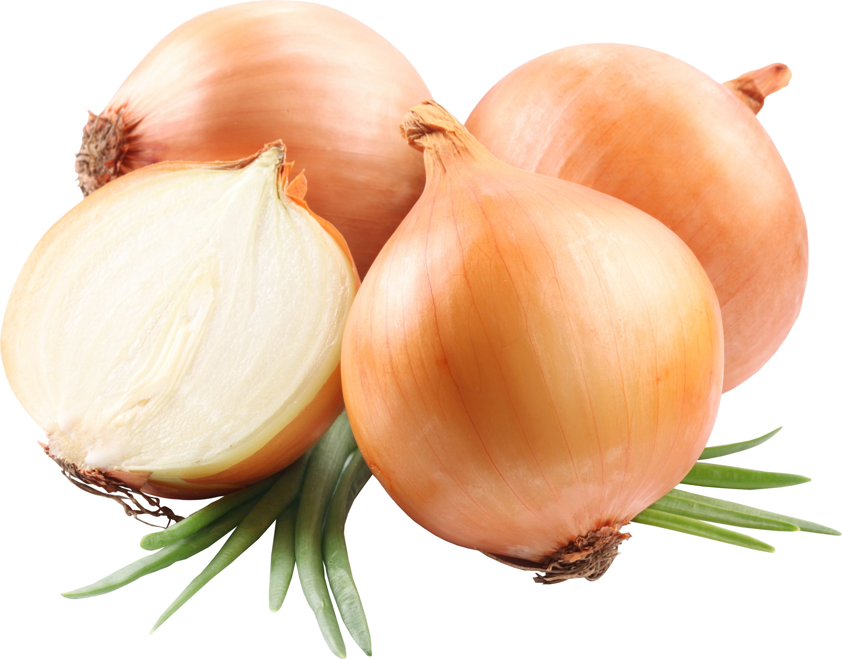 Onion PNG - 18484