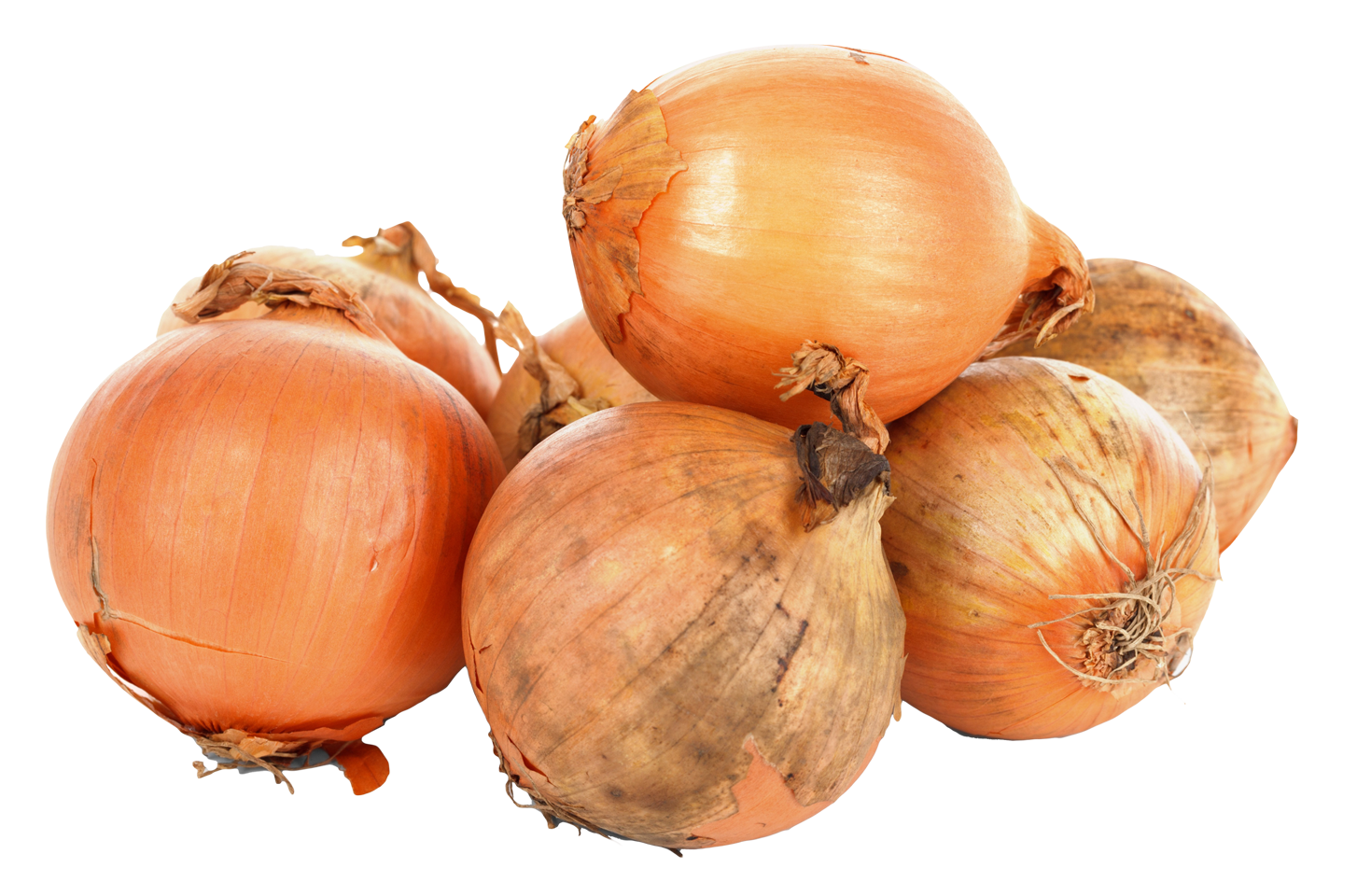 Onion PNG - 18498