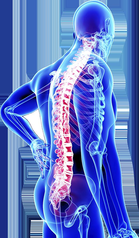 Orthopedics PNG - 72933