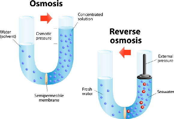 Osmosis and Reverse osmosis | Science and Technology - Osmosis PNG