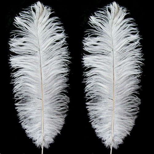 Ostrich Feather PNG-PlusPNG.com-500 - Ostrich Feather PNG