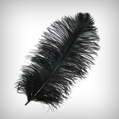 Black Ostrich Feathers - Ostrich Feather PNG