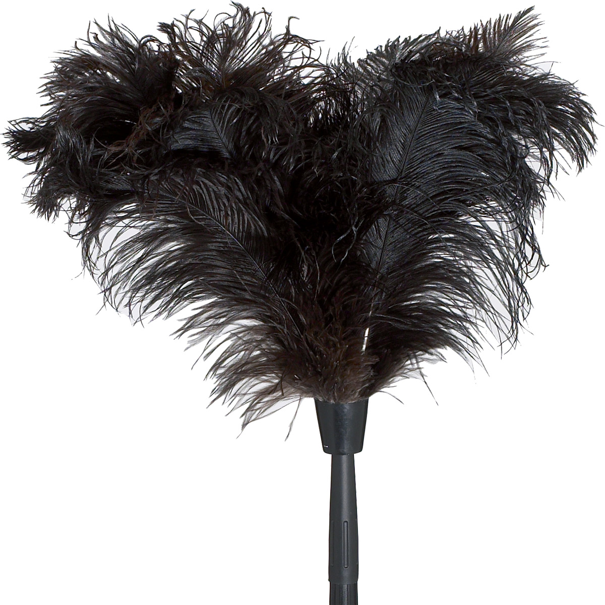 More Photos - Ostrich Feather PNG