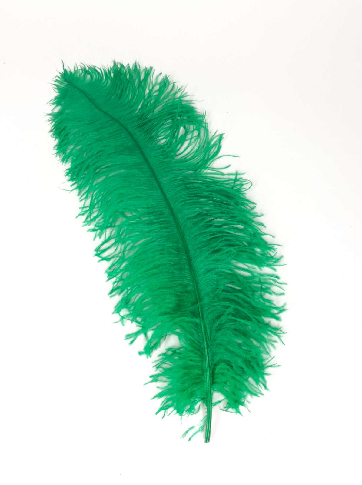 Ostrich Feather PlusPng.com  - Ostrich Feather PNG