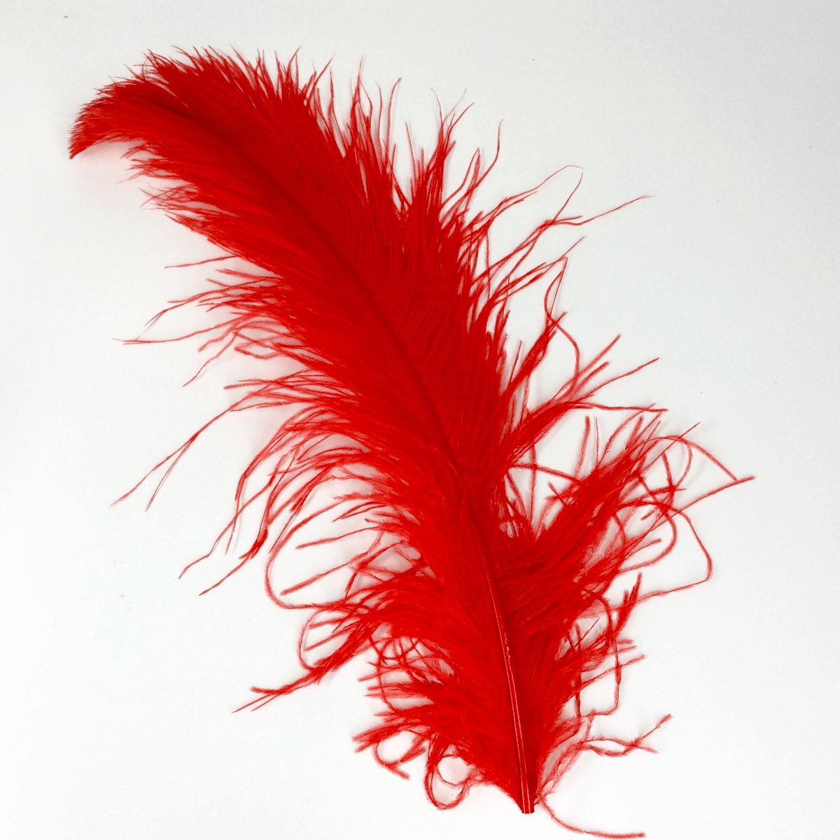 Ostrich Feathers PlusPng.com  - Ostrich Feather PNG