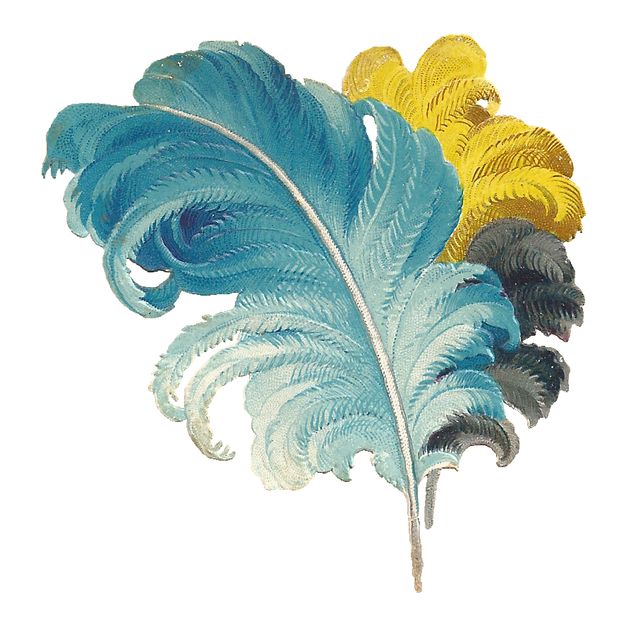 This is an antique, Victorian scrap of dyed Ostrich Feathers. I love the  different colors, and they look so luxuriously soft too. These would be  wonderful PlusPng.com  - Ostrich Feather PNG