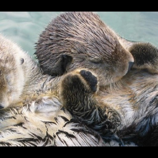 Amazon pluspng.com: sea otter Wallpaper -- HD Wallpapers of sea otters!: Appstore  for Android - Otter PNG HD