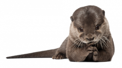 Otter PNG Transparent HD Photo - Otter PNG HD